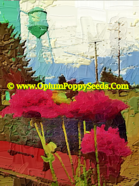 Oil Print Of Papaver Somniferum Double Petal Poppy Flower In Front Of Mail Box!